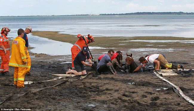 horse-stuck-in-mud-rescued-by-heroes-08