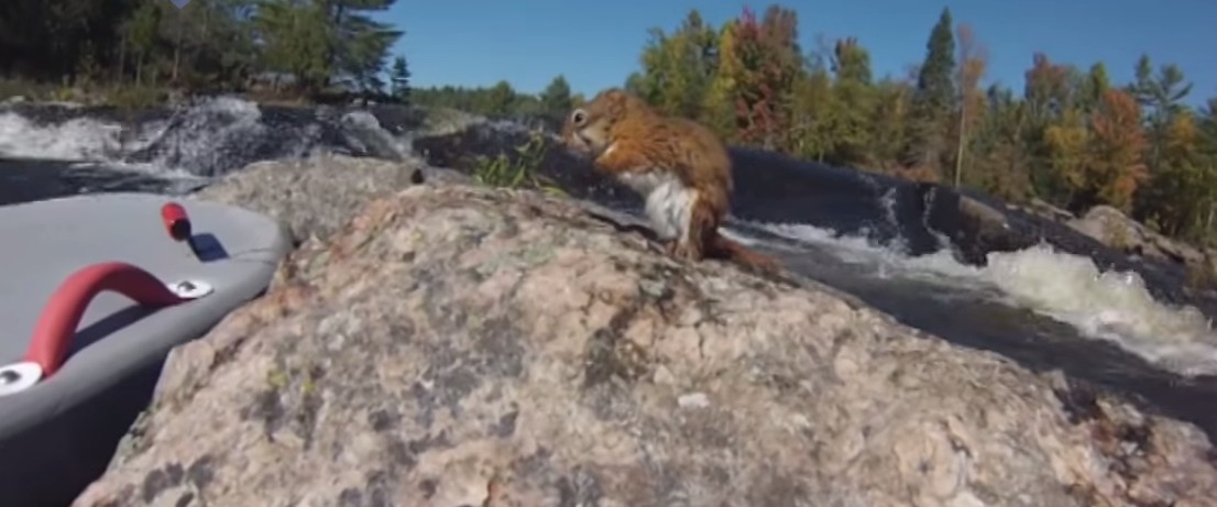 riverboarder-rescues-squirrel