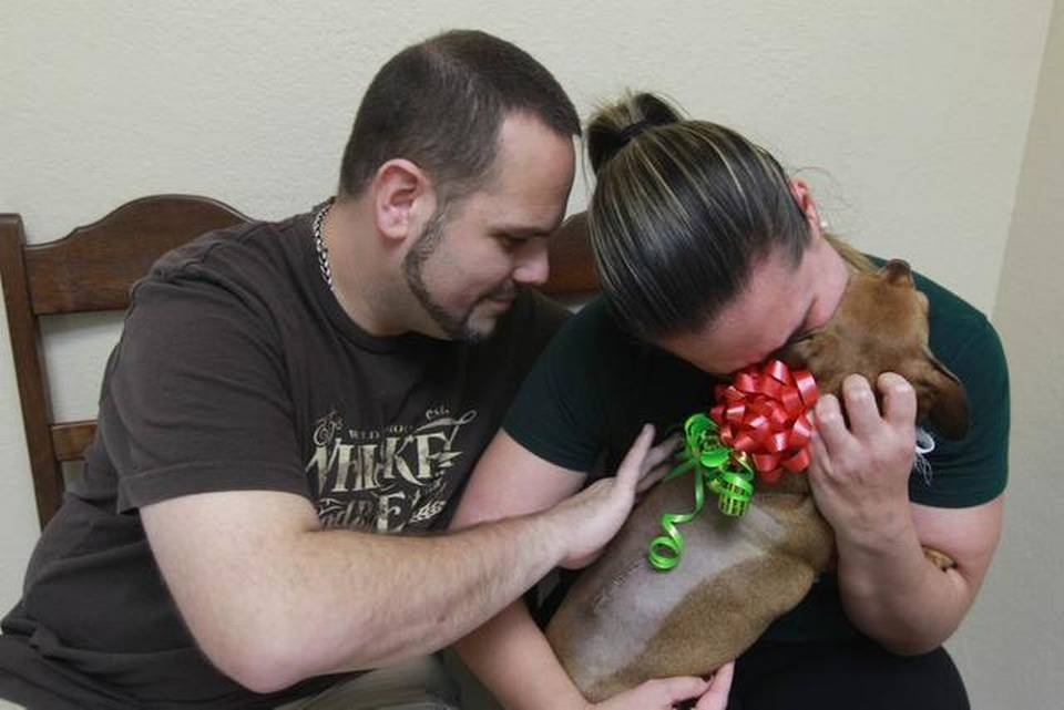 dog-reunited-with-owners-for-christmas