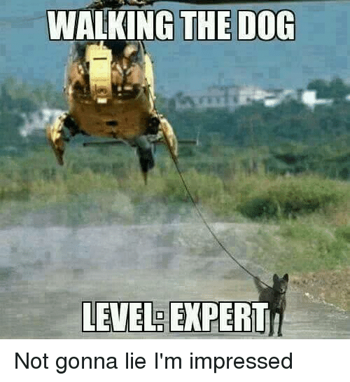 walking the dog level expert